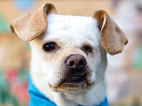 Peace Of Mind Dog Rescue Pacific Grove California